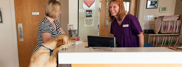 Walnut Creek Animal Hospital After Hours Drop-Off / Pick-Up